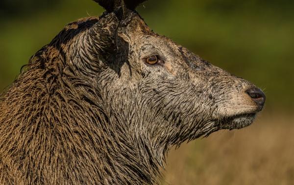 Wet Fur by philgood