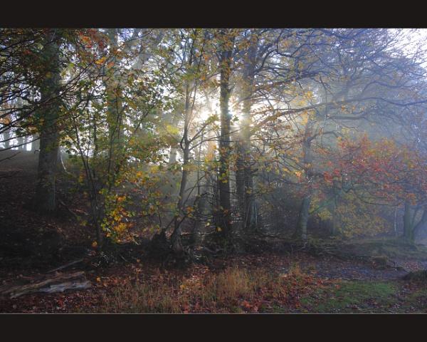 Autumn Colours #1 by scragend