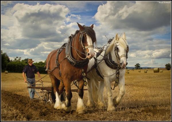 Working Horses by shaunstothardthelegend