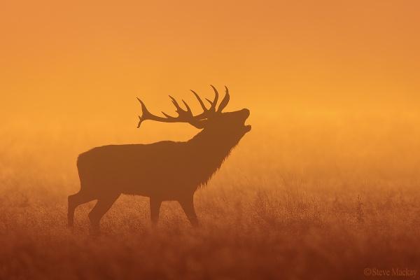 Red Dawn by SteveMackay