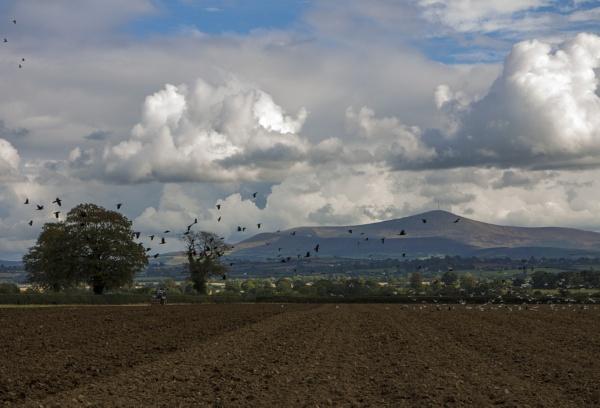 Ploughing in Ireland by jameswburke