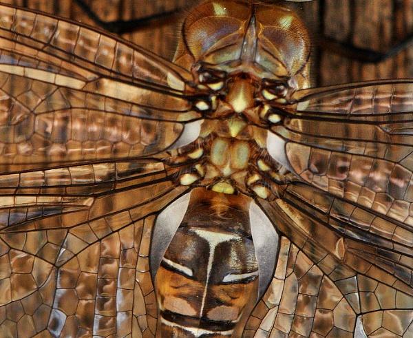 wings \'n\' eyes by davet2