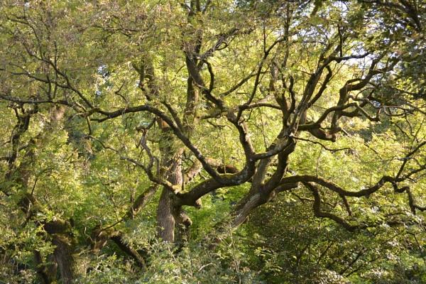 Tree by Ray_S