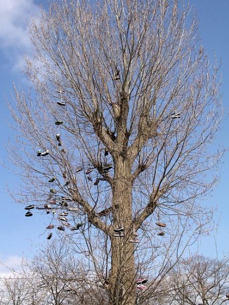 Shoe Tree by bonny
