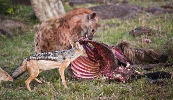 Feeding off the Kill by rontear