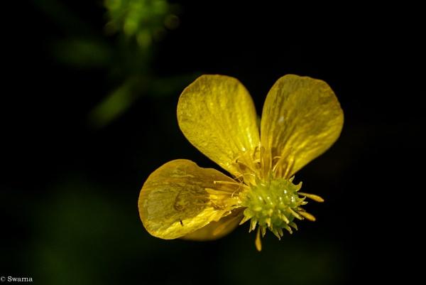 Macro Shot - Floral XIV by Swarnadip