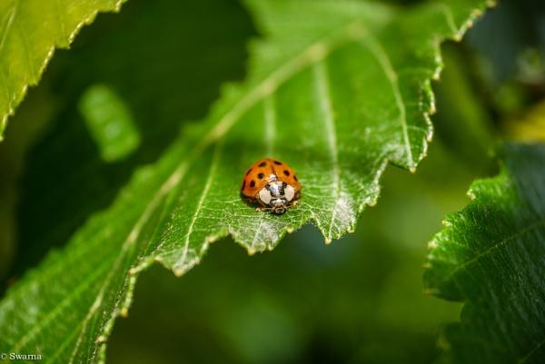 Bug by Swarnadip