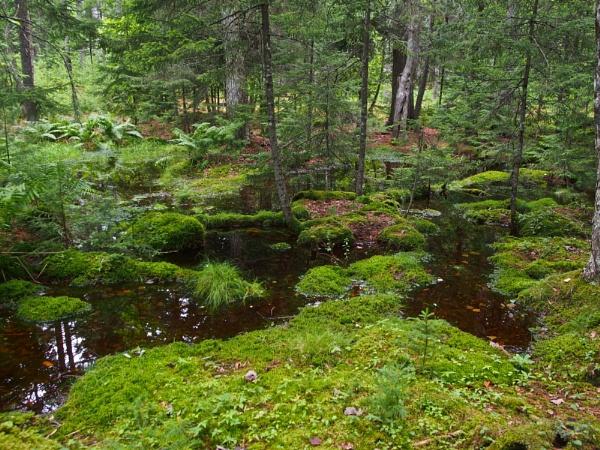 Summer in Maine # 54 by handlerstudio