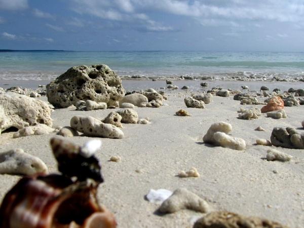 Shells spread... by Dibyajit