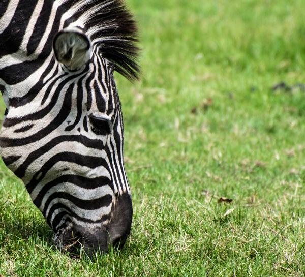 Zoo by jamesmoorephotography