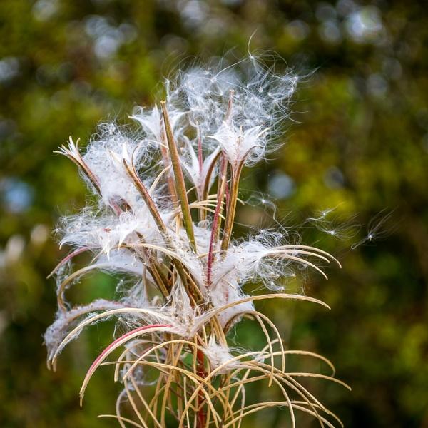Blowing in the wind by billmyl