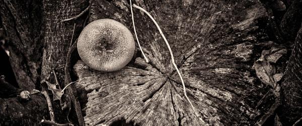 Autumn Fungus by Loudon