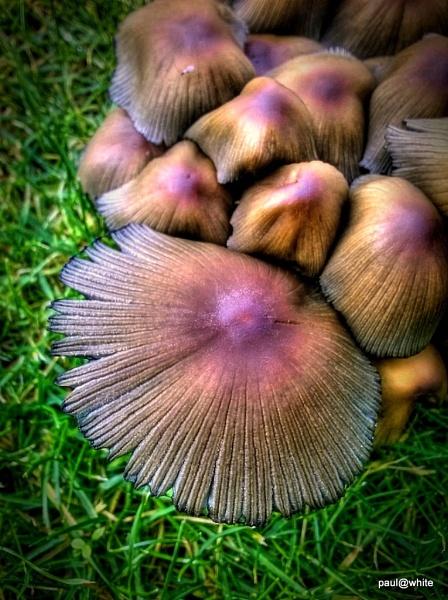 Secret pop up fungi by paw1