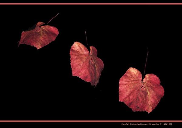 Free Fall by davidbailie