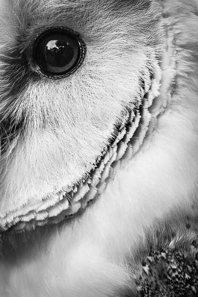 Watchful by sensorman