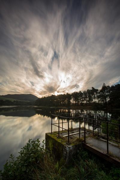 Swan pond by jingler