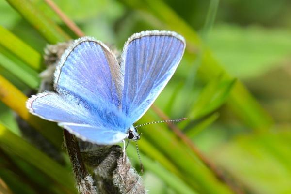 Blue Haze by Dorset6476
