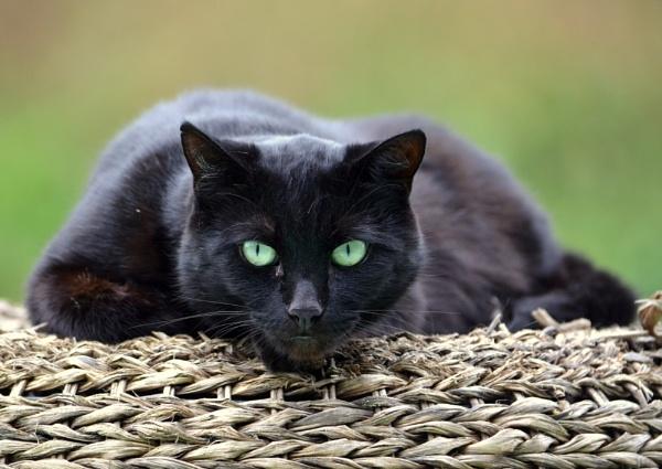Green eyed Beauty by elizabethapike62