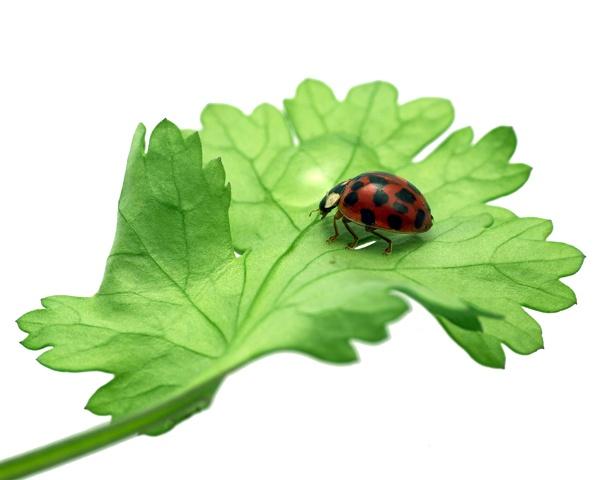 Ladybird by victorburnside