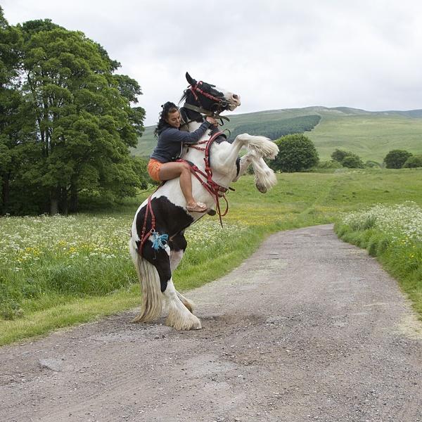 Bare Back Rider by danbrann