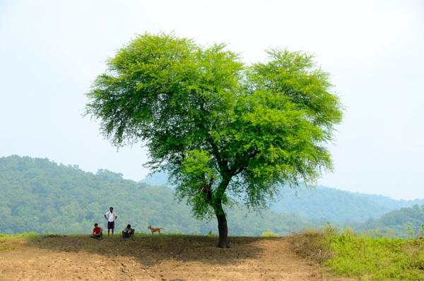 The Tree Of Life by usavasu