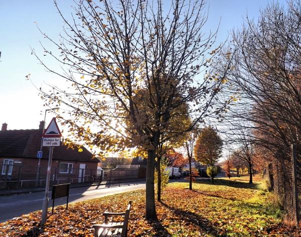 Autumn Shadows by alancharlton
