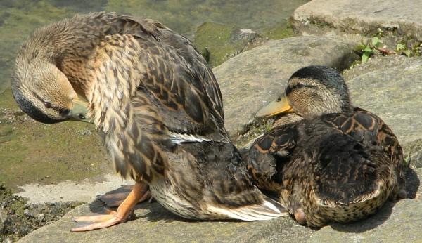 Quackers.