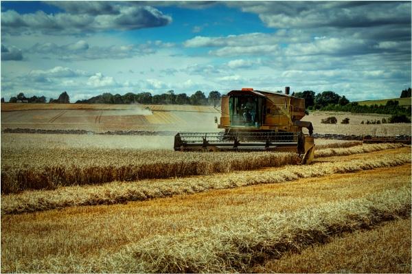 Harvester by Hoffy