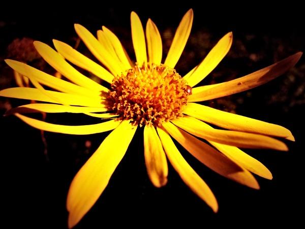 Like a sun by Thcphoto