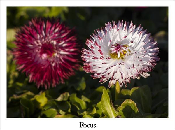 Focus by cantona43