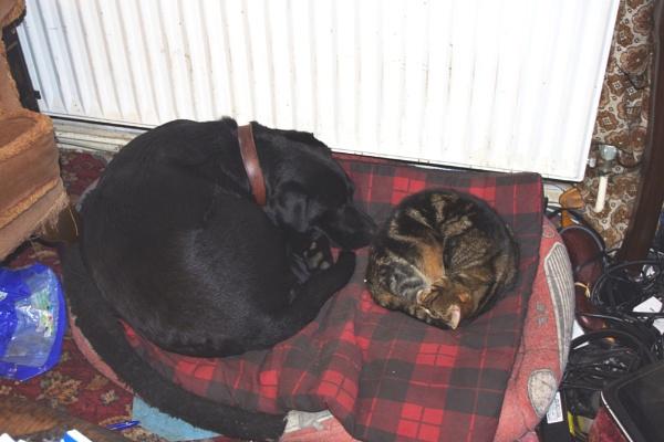 together we sleep by crobncarol