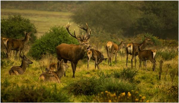 Red Deer by malleader