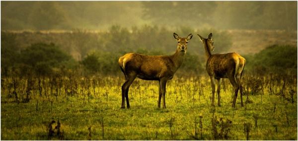 Deer alert by malleader