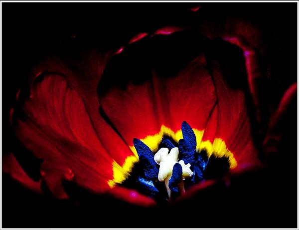 Inner Glow by Andysnapper