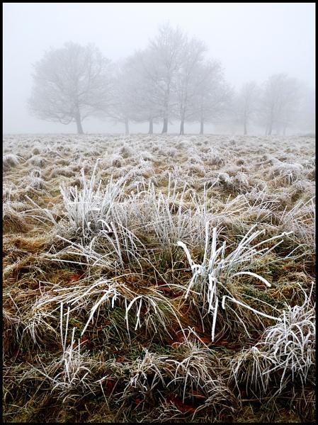 Winters Grip by Niknut