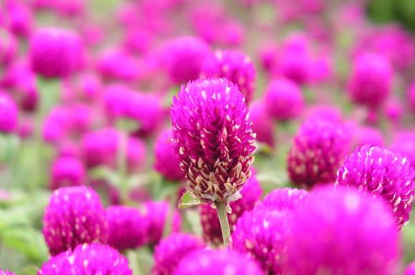 Flower by kingsyu