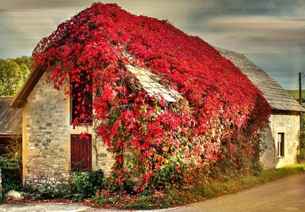 Studland - Dorset by sluggyboy