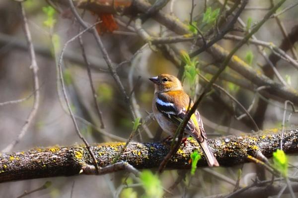 A birdie by ValeryAst