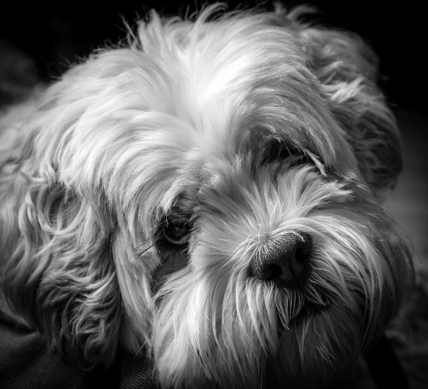 Otis by ncameronphoto