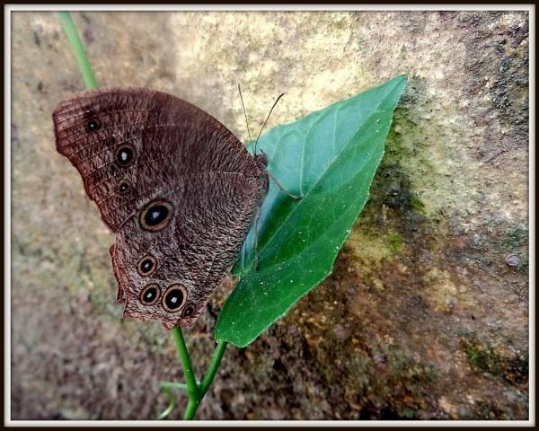Butterfly... by IshanPathak