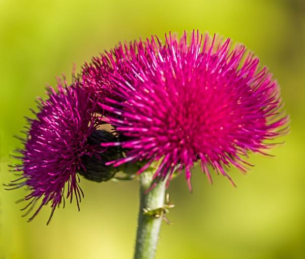 Deep purple by kuipje