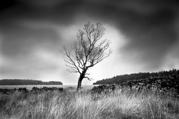 Framed by gerainte1