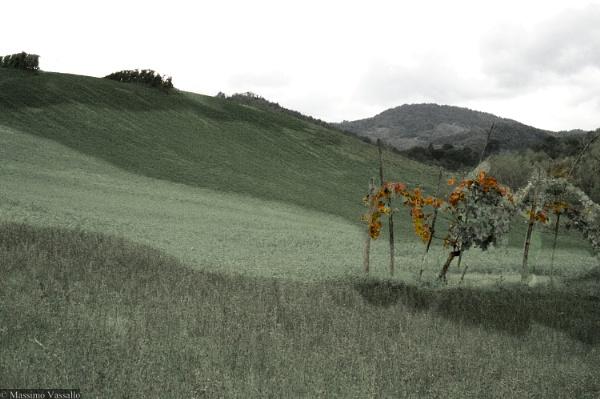 Untitled by Spincervino