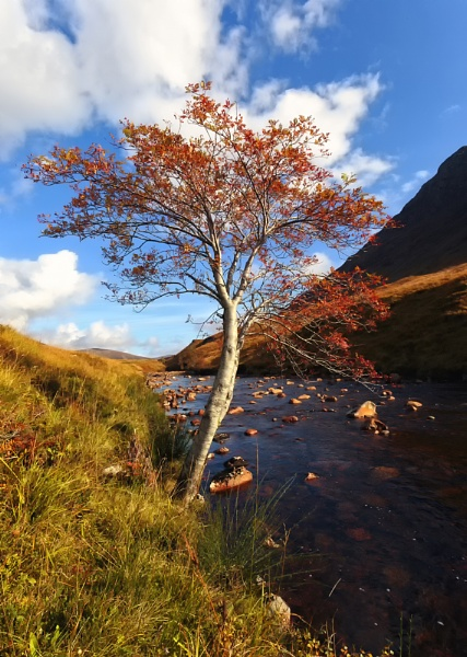 Glen Etive Silver Birch. by Buffalo_Tom