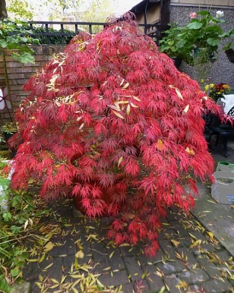 Autumn Colours by bonny