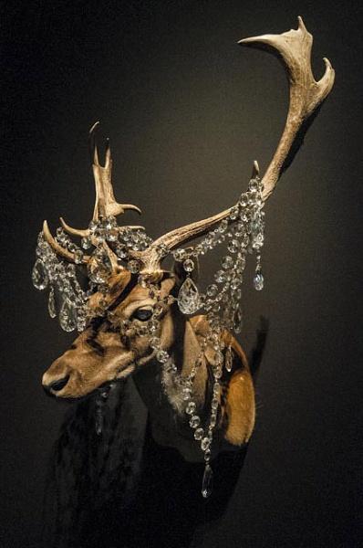 Chandledeer by Baronred