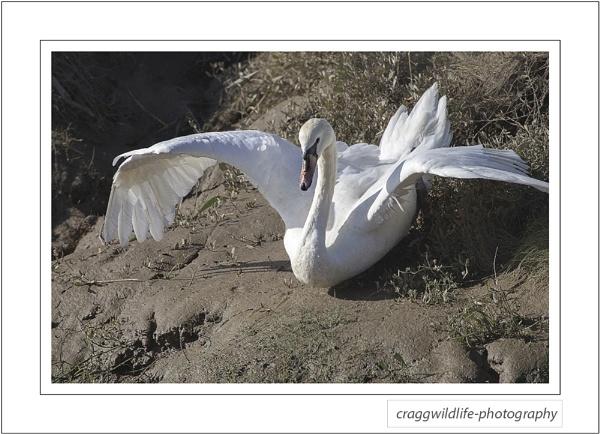 lancashire wildlife by craggwildlifephotography