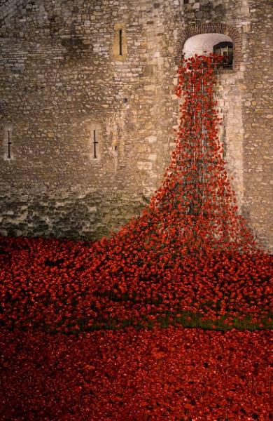 Tower of Poppies by Kim Walton