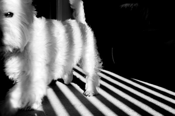 Shadow Lines by gowebgo