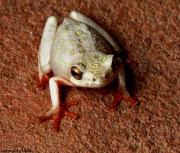Froglet :)